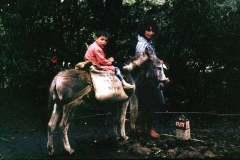 24_donkey_and_Flit_St_Helena_June1970