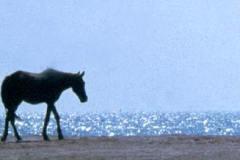 48_Kings_stables_Bahrain_Oct1971